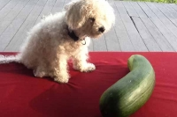 5 Horrible Places To Take Your Pet Zucchini With The Badlands