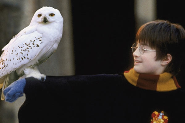 5 Magical Musical Moments From Harry Potter And The Philosopher's Stone With Conductor Nicholas Buc